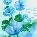 Blauwe papaver 2